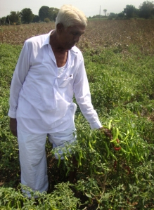 Appa examines peppers growing in his field in Northern Maharashtra.