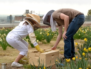 Campus Beehive Project
