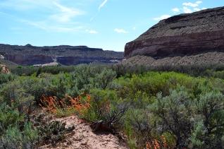 desertpaintbrush1