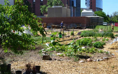 Pioneer Garden, one of two gardens that make up the U of U Edible Campus Gardens.