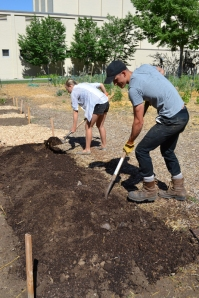 Students prep the soil at the Pioneer Garden.