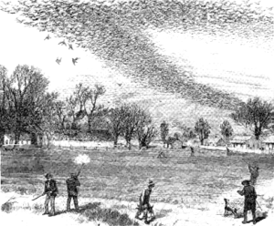 A rendering of a passenger pigeon shoot from an 1875 gathering during a pigeon flyover.
