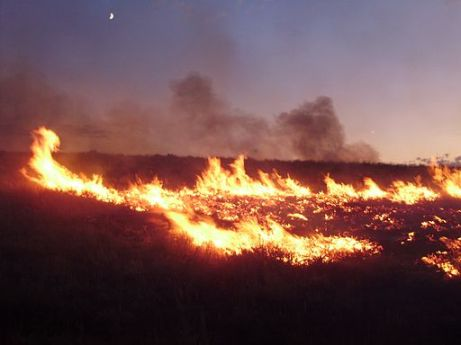 The Susie Fire burning on August 4, 2011 northwest of Elko, Nevada. Photo courtesy of Wikimedia Commons.