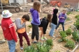 Elementary students try to identify edible plants at the student gardens on campus.