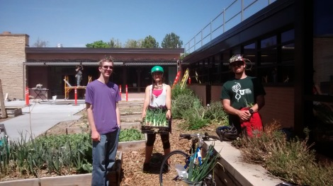 Volunteers work at the Sill Garden.
