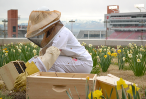 A student, wearing the proper beekeeping equipment, instals new hives on top of the Marriott Library