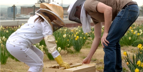 SCIF helps campus bee-come an integrated landscape