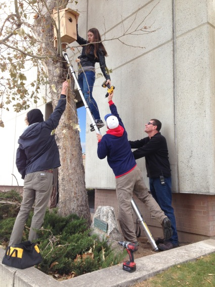 The Wildlife Society works with Facilities Management to secure nesting boxes around campus.