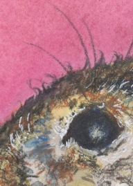 "Detail of second image in the series—the rabbit's eye; ""so much connection is made through eye contact within our own species."""