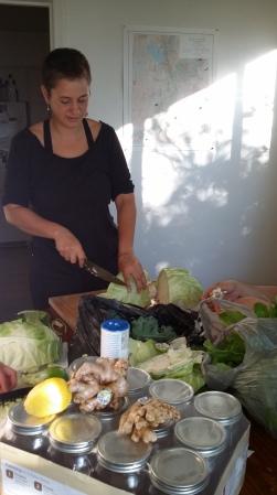 Erika Longino, Edible Campus Garden steward, prepares cabbage for sauerkraut.