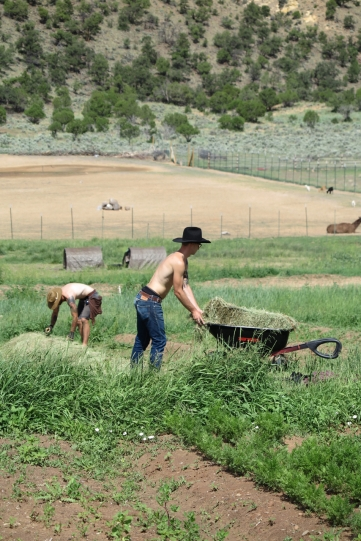 Two cowboy farmers pushing a wheelbarrow around hay