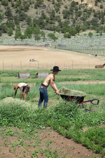 Two cowboy farmers pushing a wheelbarrow around hay