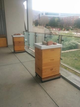 Not for decoration - these are the Marriott Library beehives.