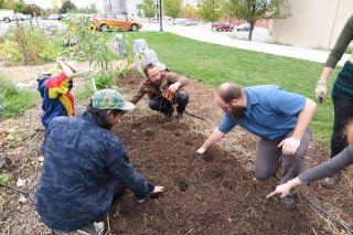 Edible campus garden volunteers plant garlic at last fall's garden soiree.