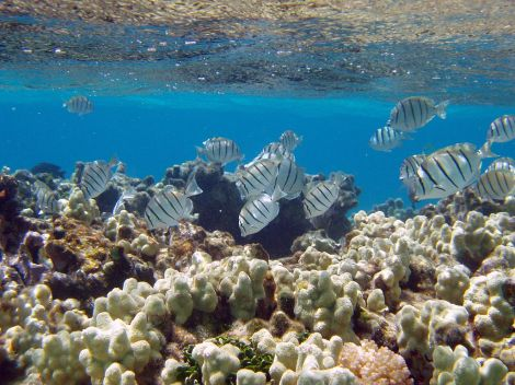 Fish swimming underwater in a coral reef.