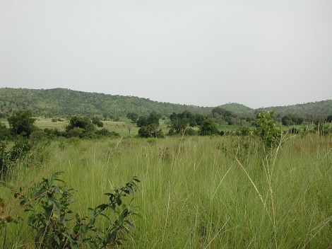 Sahel savanna in Burkina Faso.