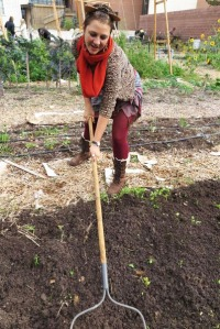 Garden volunteer using a hoe.