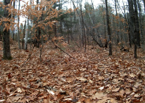 The latest image from a forest floor camera in Intervale, New Hampshire. Via the PhenoCam Network.