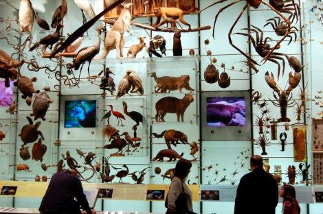 Biodiversity by Dano, CC by 2.0 via Flickr.